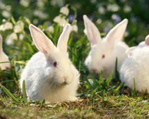 Estudia el curso de como acondicionar instalaciones para criar conejos ofrecido por el Sena 6