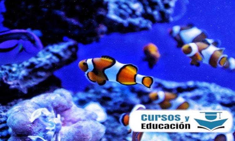 curso de alimentación de peces