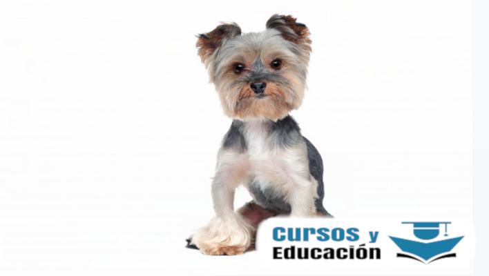 estudio de peluquería canina
